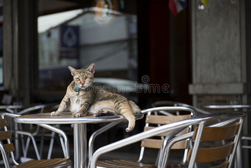 The cat royalty free stock images