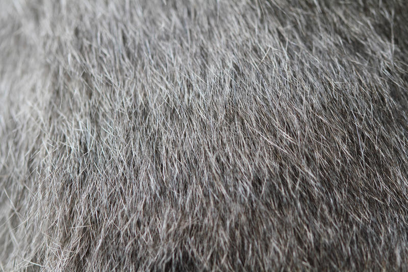 Download Cat Fur stock photo. Image of softness, fluffy, hairy - 26270790