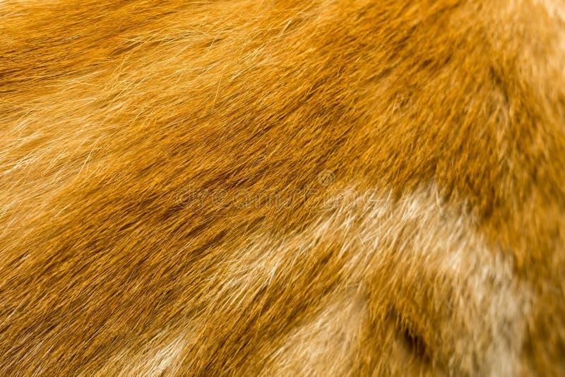 Cat Fur Texture rouge photographie stock
