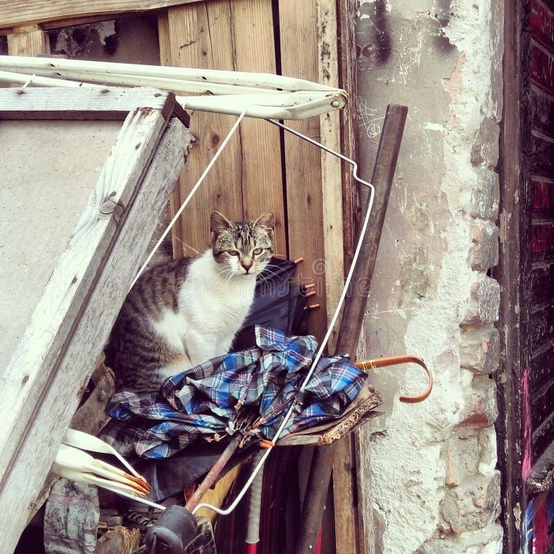Cat at the garbage, Novi Sad royalty free stock photo