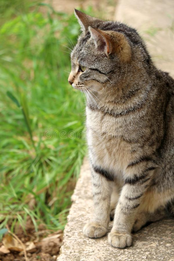 Cat In The Garden. Brown tabby cat in the garden. Selective focus, green bokeh royalty free stock images