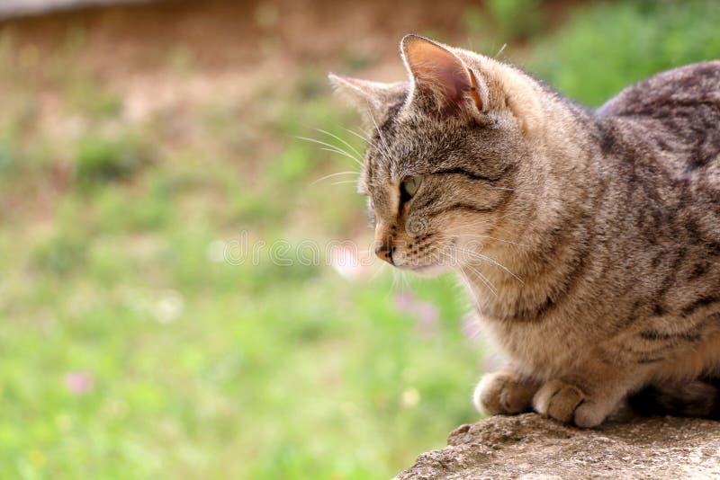 Cat In The Garden. Brown tabby cat in the garden. Selective focus, green bokeh stock image
