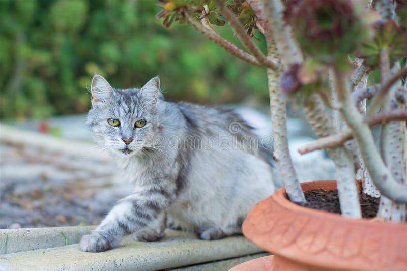 Cat in garden stock photos
