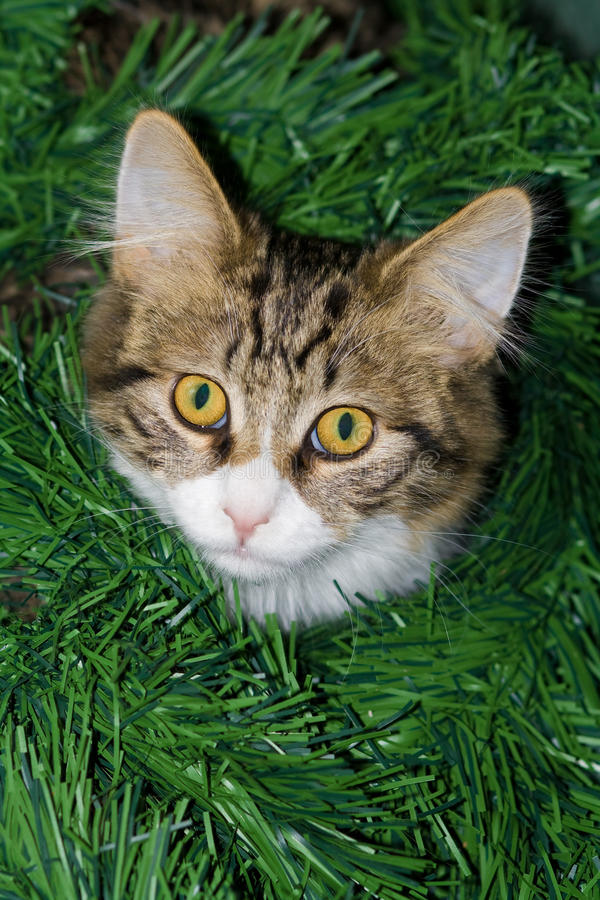 Cat in garland. royalty free stock photos