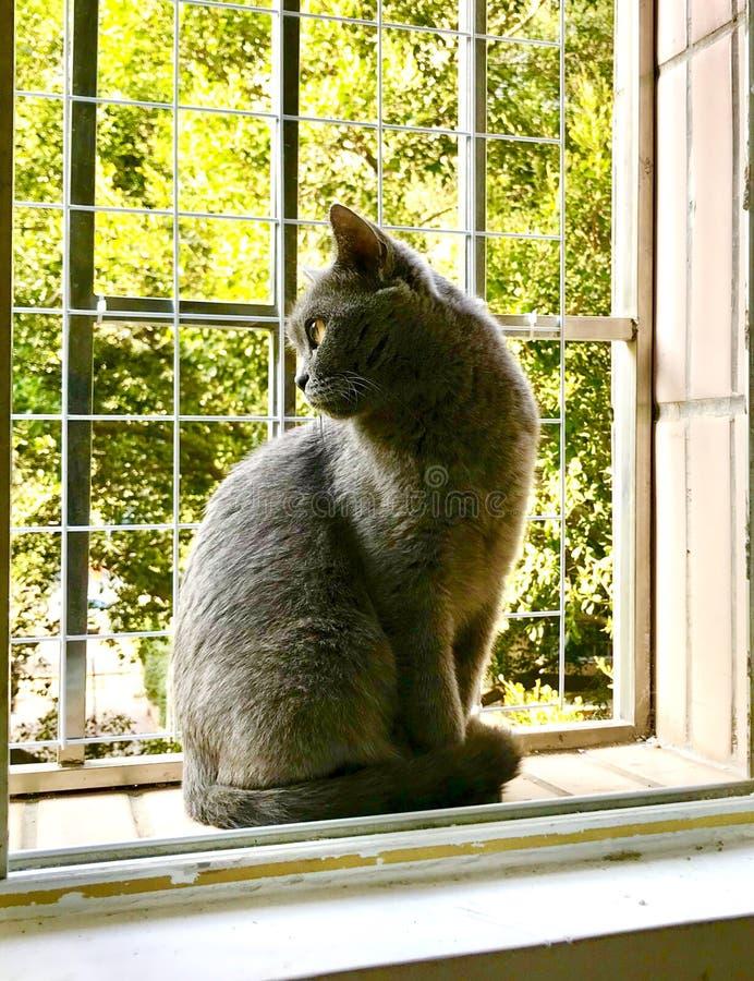 Cat Gaze fotografía de archivo libre de regalías