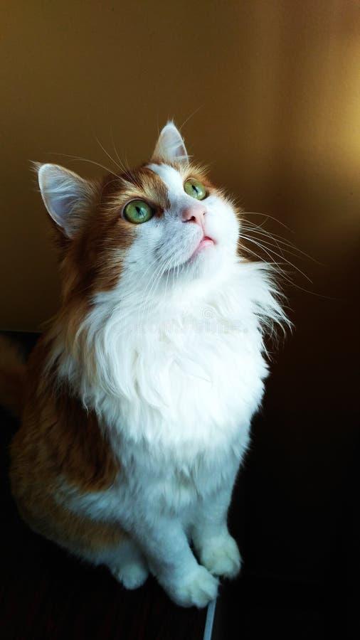 Cat Georges 2 stockbild