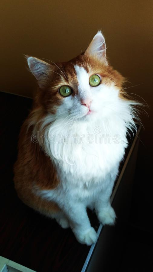 Cat Georges 5 stockbild