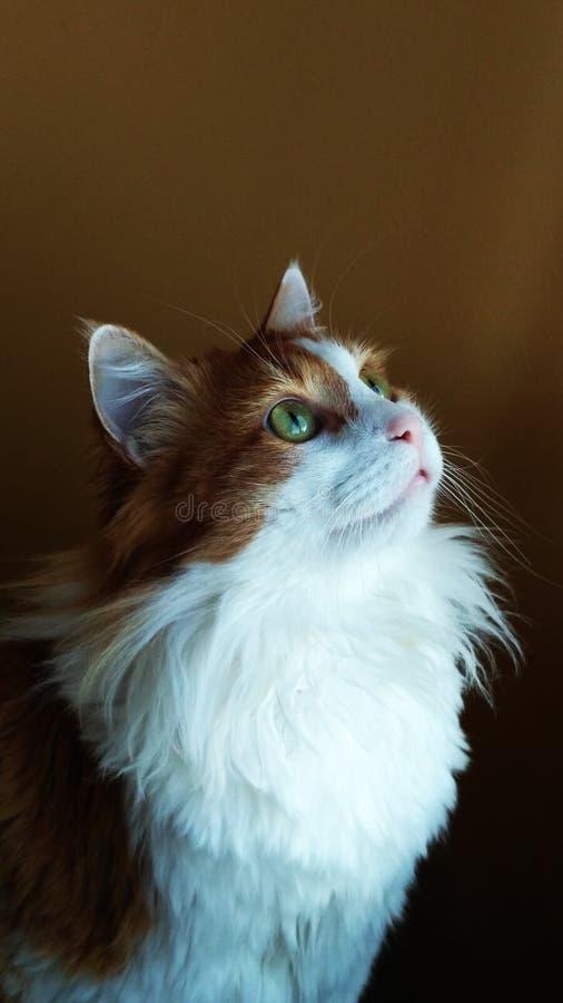 Cat Georges 11 stockfotografie