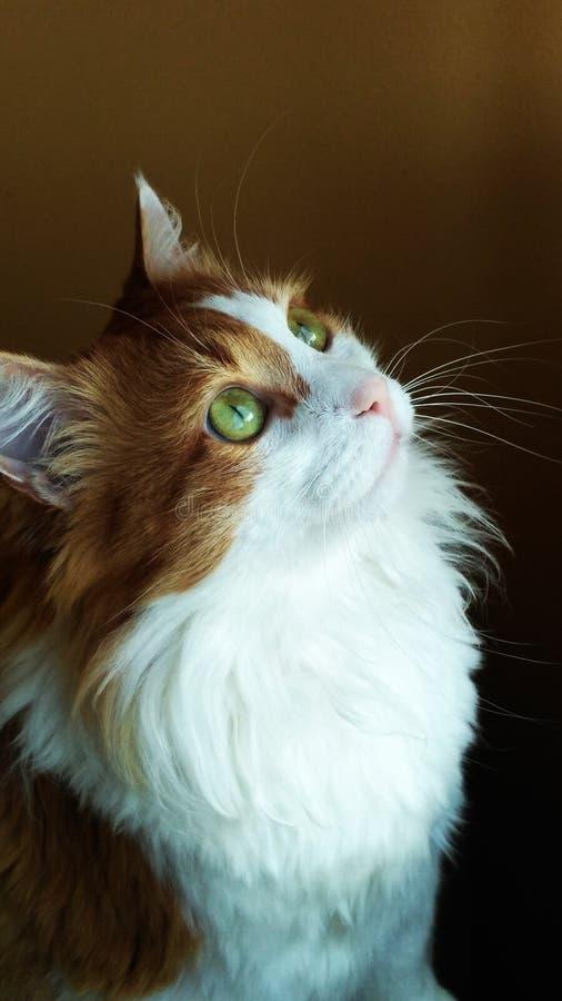 Cat Georges 13 lizenzfreies stockbild