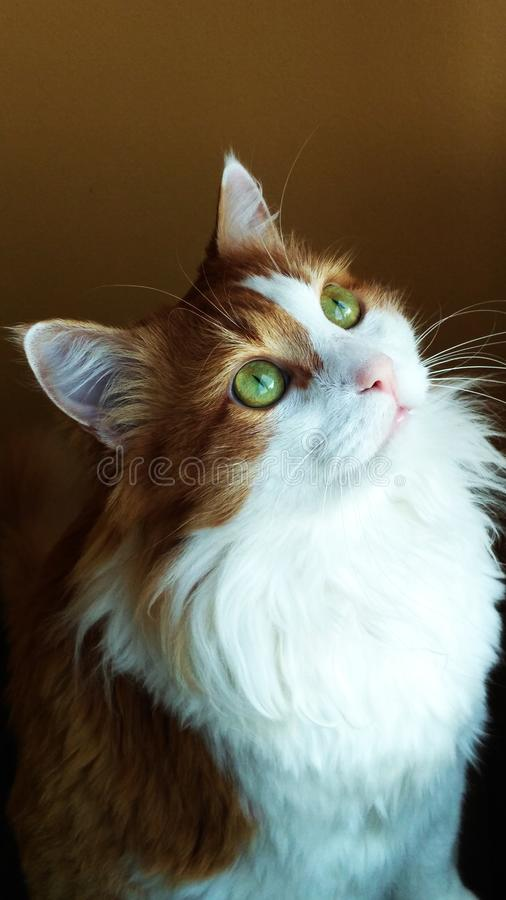 Cat Georges 14 stockfoto