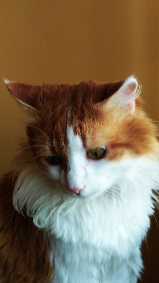 Cat Georges 16 stockfotos