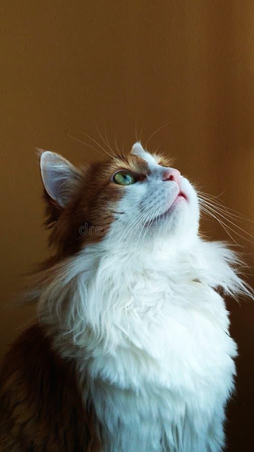 Cat Georges 17 lizenzfreie stockfotos