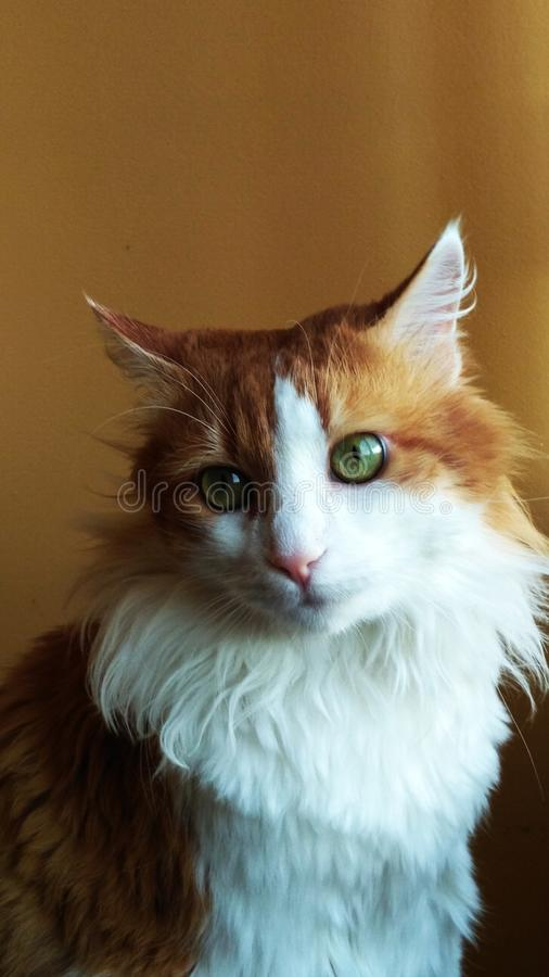 Cat Georges 19 stockfotografie
