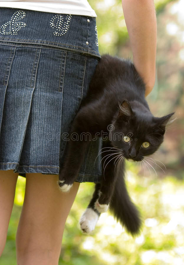 Cat and the girl royalty free stock image