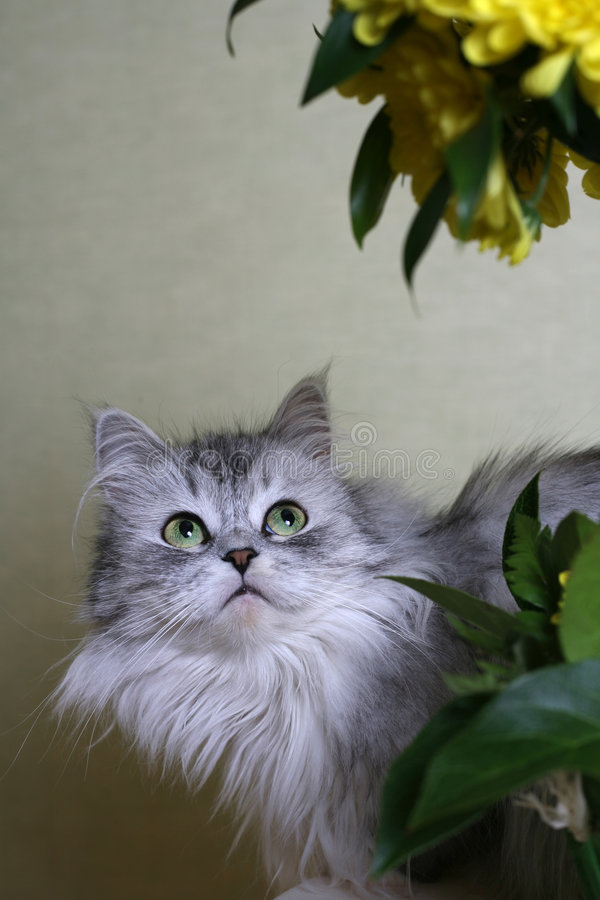 Cat-girl royalty free stock photos