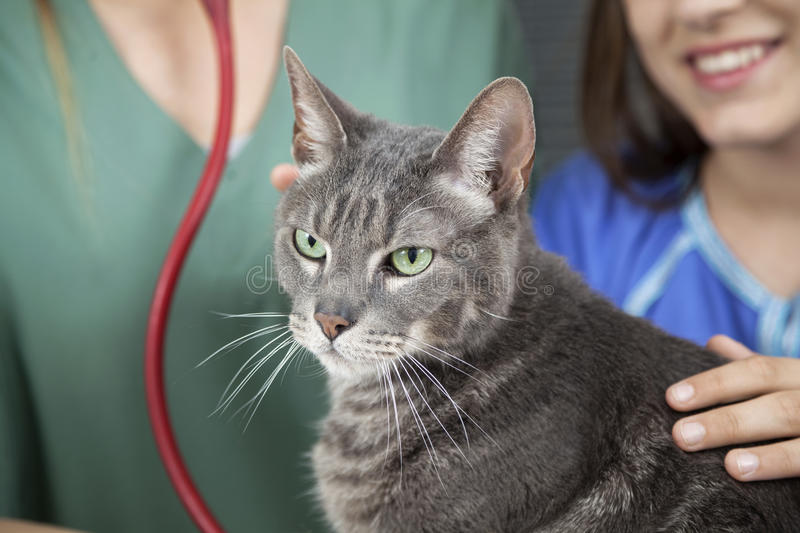 Cat With Girl And Doctor In Background. Closeup portrait of cat with girl and doctor in background stock images