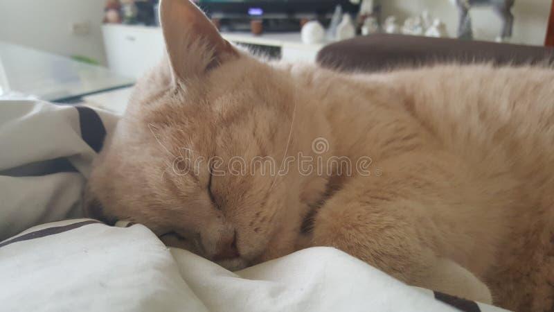 Cat Gismo lizenzfreies stockfoto