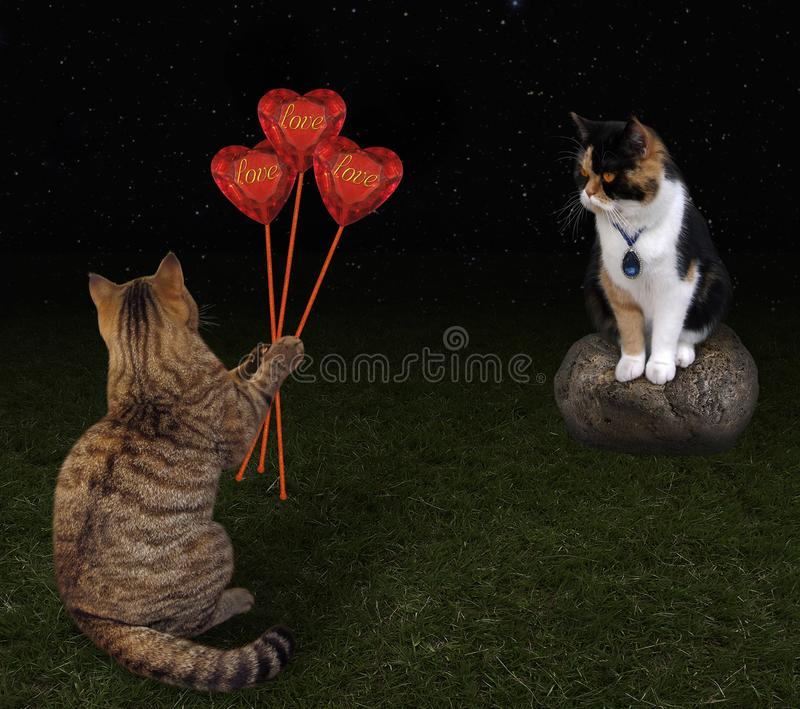 Cat gives bouquet of hearts stock photography
