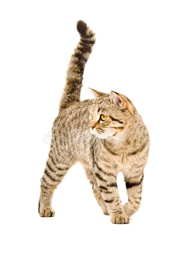 Cat on the go stock photography