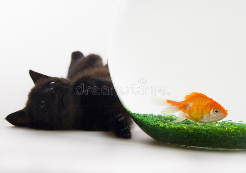 Cat & Gold fish stock image