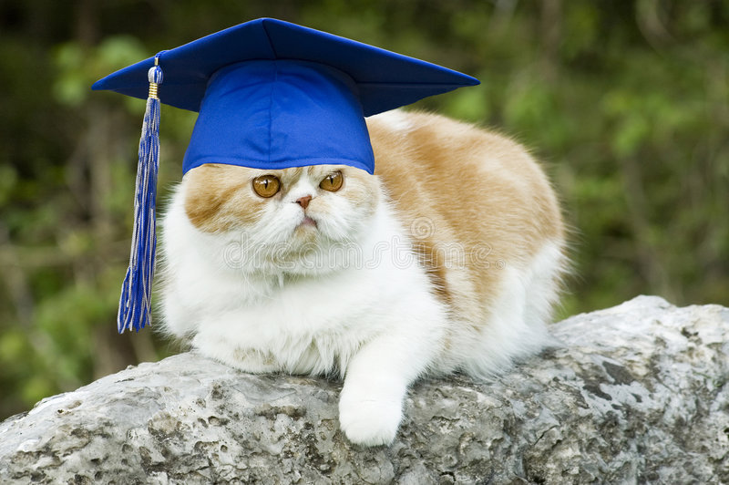 Cat with Graduation Hat stock photography
