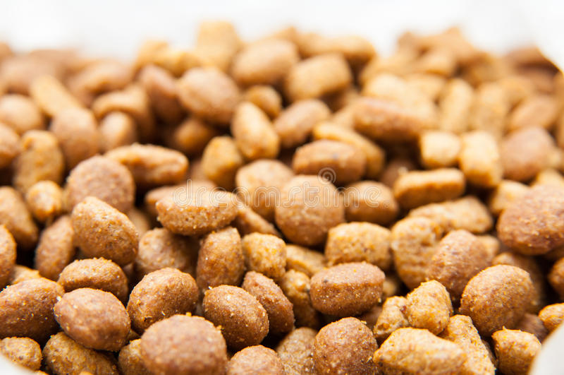 Cat grains detail stock photos