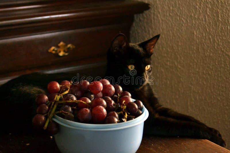 Cat With Grapes fotografia stock libera da diritti