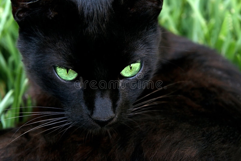 Cat in the grass. Extreme closeup stock images