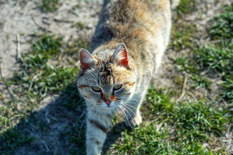 Cat in the grass. Beautiful cat in the grass royalty free stock images