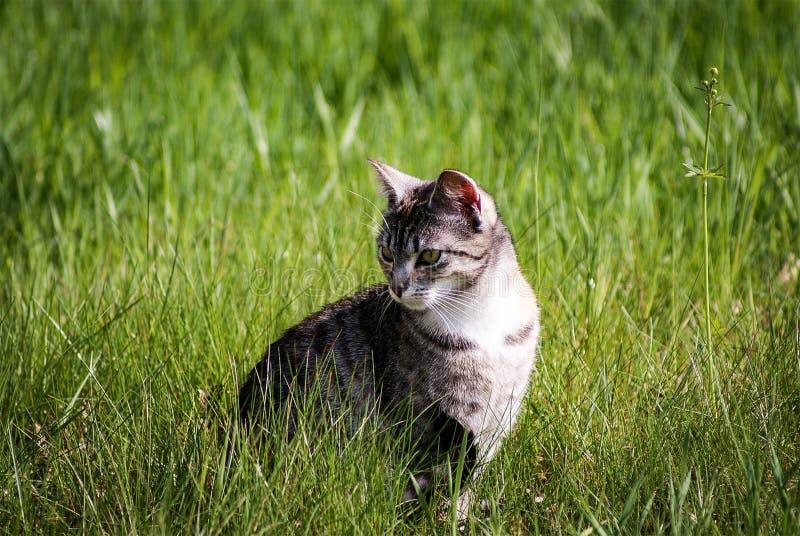 Cat, Grass, Fauna, Small To Medium Sized Cats stock photo