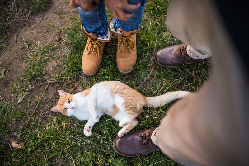 A cat on the grass and legs and feet of senior unrecognizable couple outdoors. A cat lying on the grass and legs and feet of senior unrecognizable couple stock image