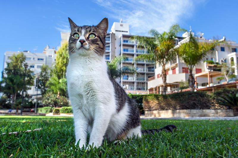 Cat on a grass. Outdoor portrait royalty free stock image