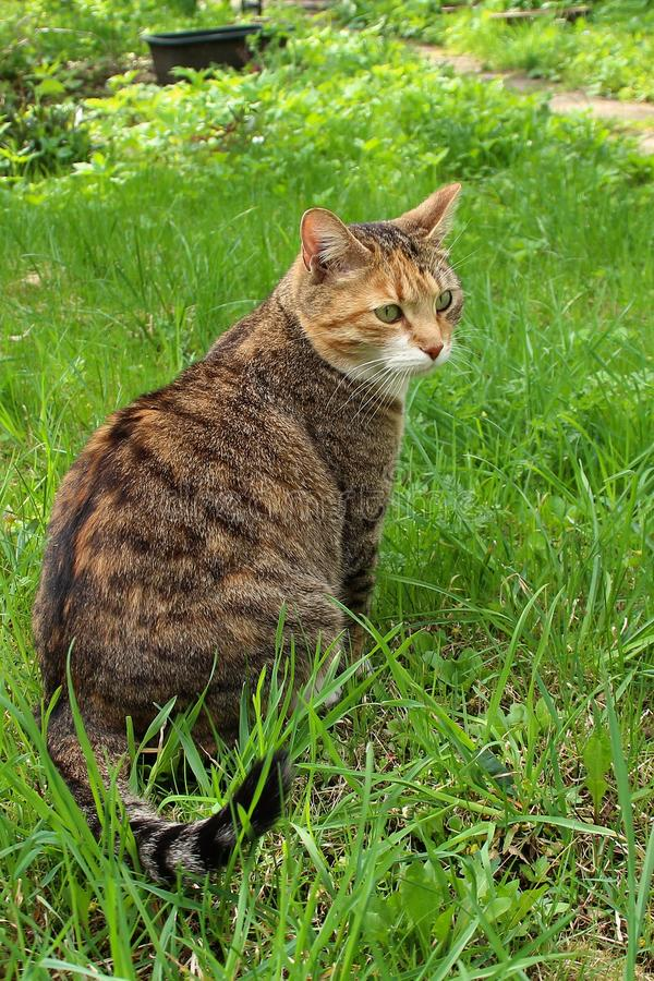 Cat in the grass. royalty free stock photo