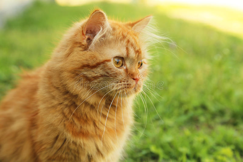 Download Cat on grass stock image. Image of leaf, outside, focus - 53756599