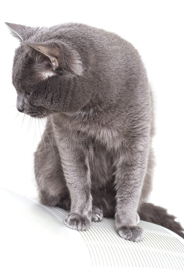 Cat on grate royalty free stock photos