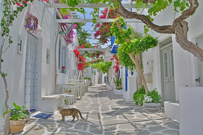 Cat in Greek Island Street. Cat crosses a quiet, shady village street on a greek island in the Cyclades Group with flowering bougainvillea royalty free stock photography