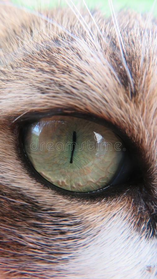 Cat green eye pupil royalty free stock photo