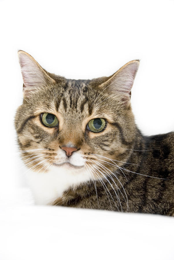 Download Cat With Green Eyes stock image. Image of eyes, smile - 29113871