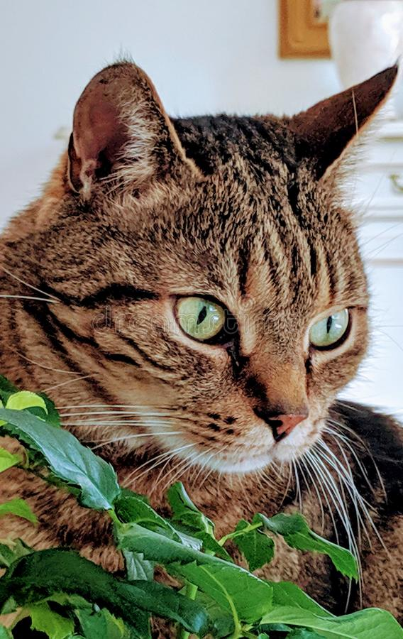 Cat with green eyes royalty free stock images