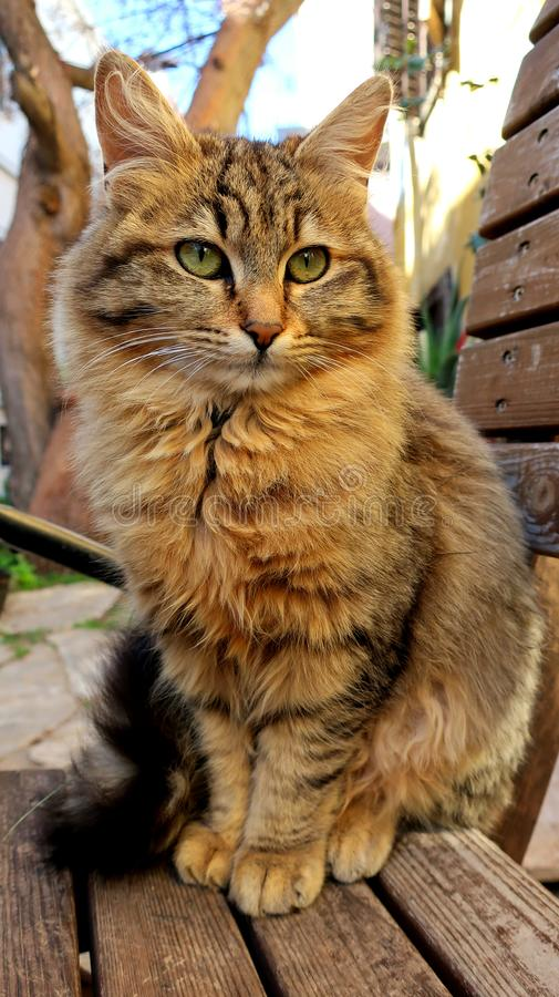 The cat with the green eyes on the stret. This beautiful with green eyes cat sitting at sunshine stock photography