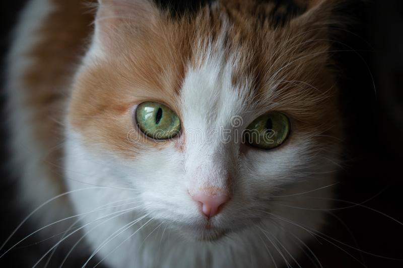 A cat with green eyes. A young cat with green eyes looks up stock photography
