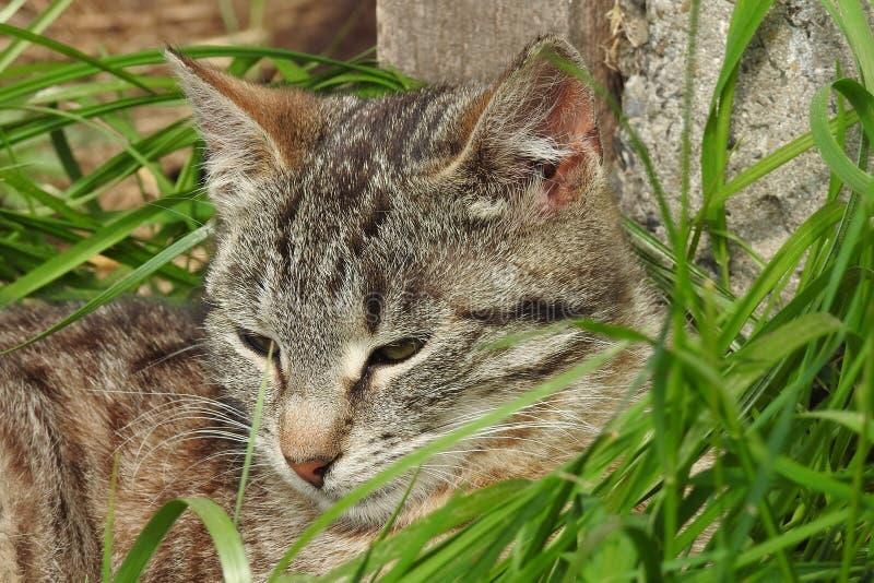 Cat, Green, Fauna, Mammal stock photos