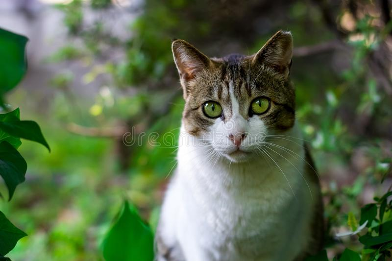 Cat, Green, Fauna, Whiskers royalty free stock photos