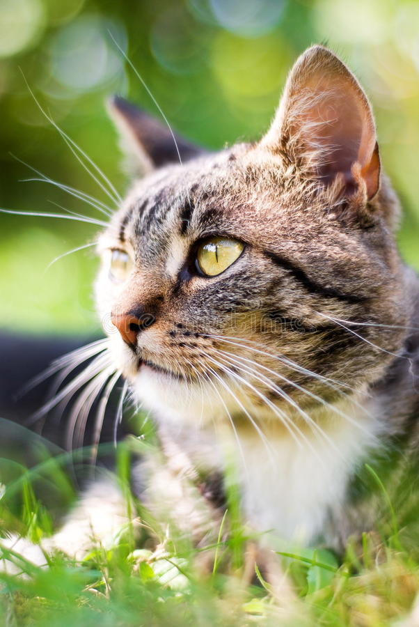Cat on green grass stock photography