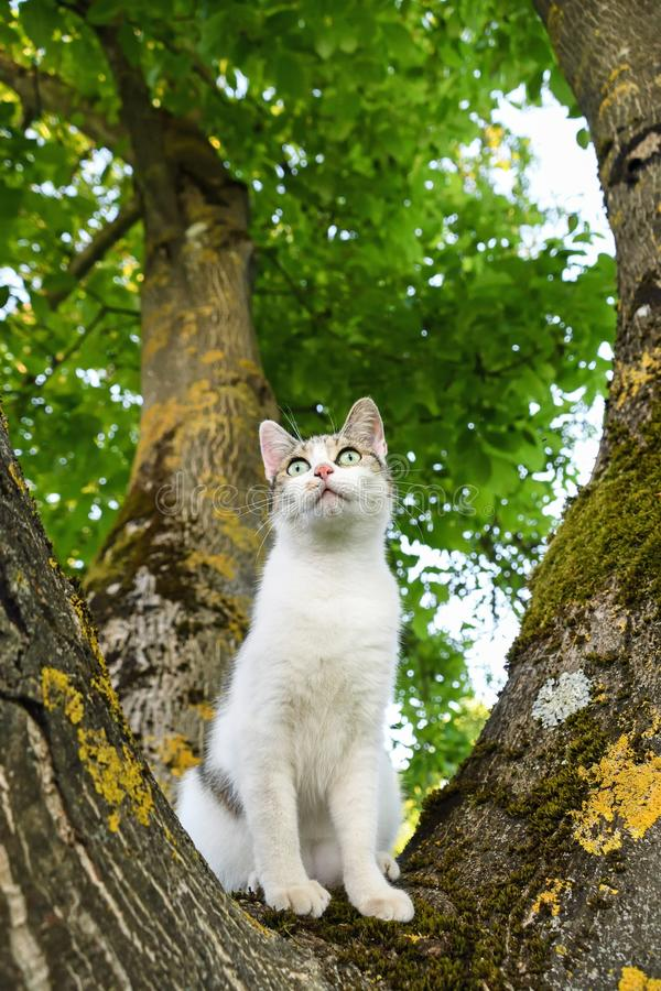 Cat, Green, Tree, Mammal stock image