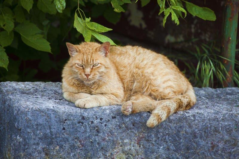 Cat2 grincheux photos libres de droits
