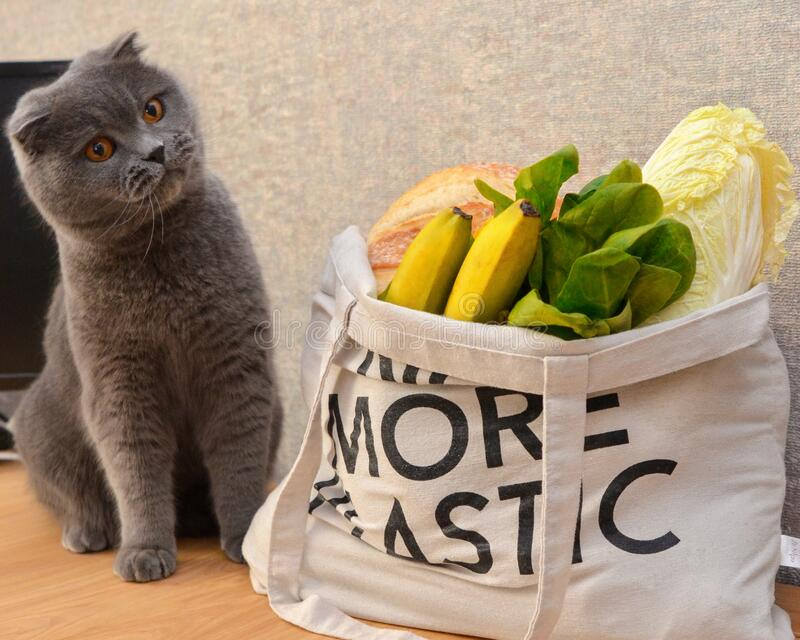 A cat and groceries in eco bag royalty free stock images