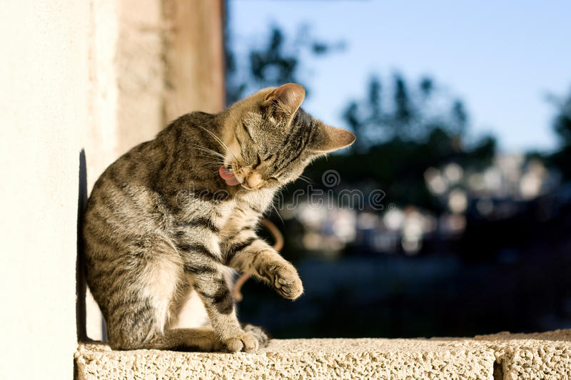 Cat grooming stock images