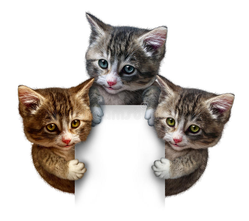 Cat Group Blank sign. Cat or kitten group around a blank vertical card sign holding the framed message board as cute felines with smiling happy expressions