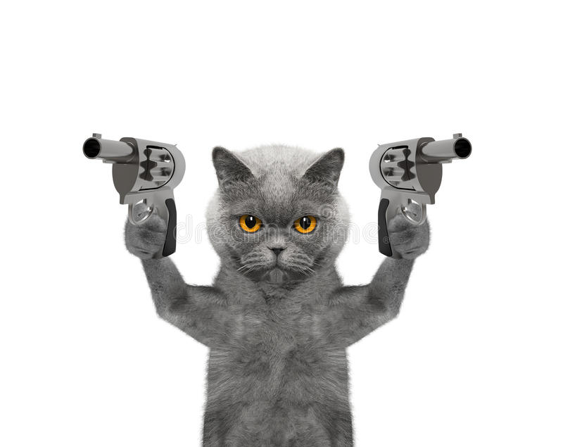 Cat with guns is murderer royalty free stock image